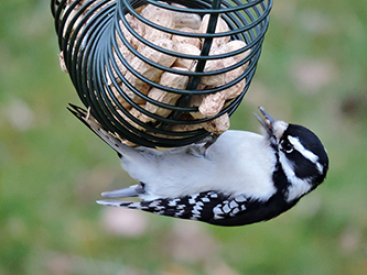 Help Birds this Winter! – Join Project FeederWatch