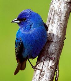 Ornithology - Wikipedia
