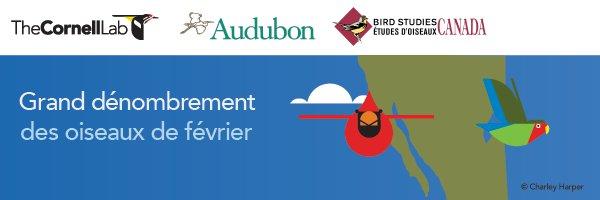 Participez à un dénombrement mondial d'oiseaux depuis votre cour!