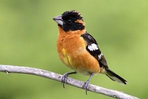 British Columbia's First Breeding Bird Atlas Published