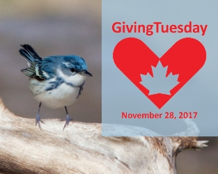 Give a Gift for Canada's Birds on Giving Tuesday