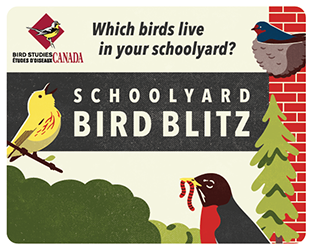 Welcome Feathered Friends Back to School