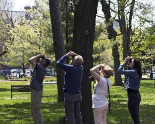 Thousands of Torontonians will unite to celebrate birds and migration