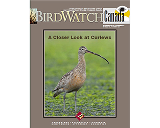 "Refreshing Reads in the Summer Issue of ""BirdWatch Canada"""