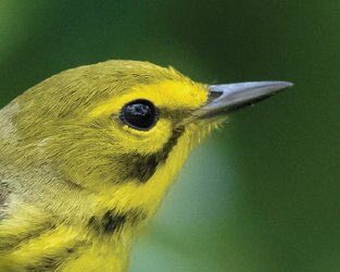 Making the Switch to Bird Friendly Coffee