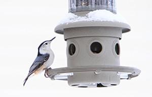 Vous vous intéressez aux oiseaux? Vous aimeriez mieux les connaître? Participez au Projet FeederWatch!
