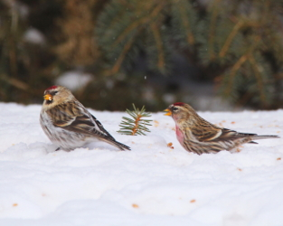 Join Us for the Next Great Backyard Bird Count!