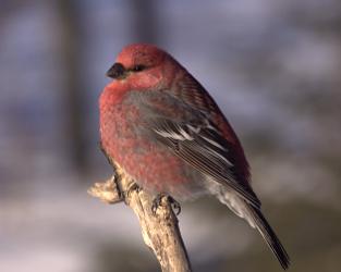Le Grand dénombrement des oiseaux de février 2019