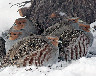 The Great Backyard Bird Count Provides Valuable Insight