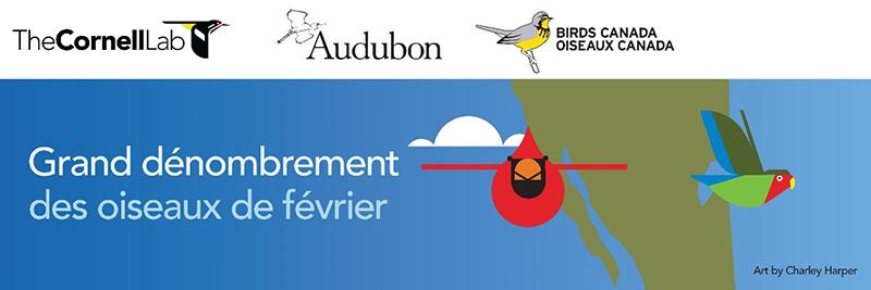 Compter pour aider : Participez au Grand dénombrement des oiseaux de février