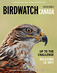 See your support in action in the latest issue of BirdWatch Canada