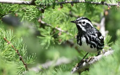 Hike for bird conservation comes to Ontario and Québec