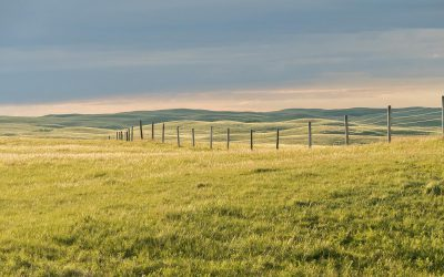 New Grasslands Conservation Incentives project to benefit Canadian ranchers and birds