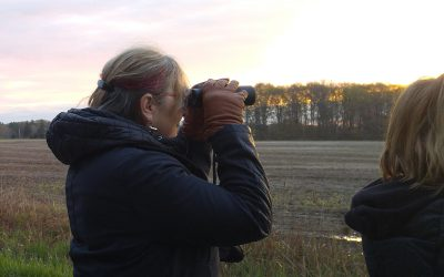 Sign up now for the Great Canadian Birdathon