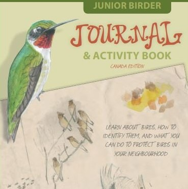 Link to Junior Birder Guide. The cover of the Junior Birder Guide features a sketch of several birds, including a beautiful male Ruby-throated Hummingbird