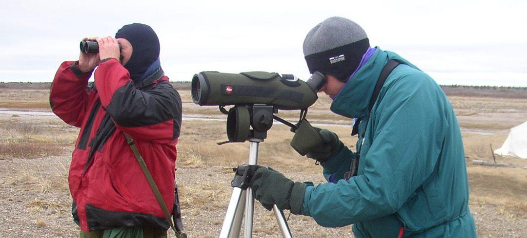 Coming up in 2021: Ontario's third Breeding Bird Atlas!