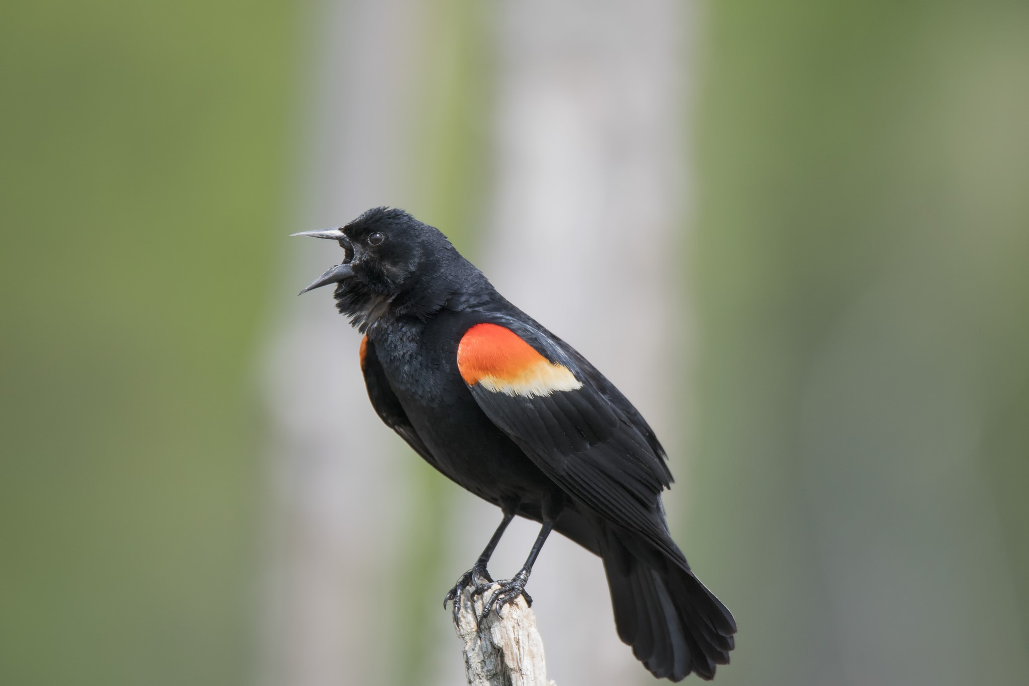 Despite COVID-19 We Are Still Busy Working For Canada's Birds!