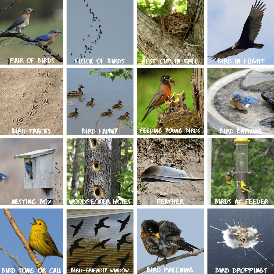Link to Yard Bird Bingo. Image features a bingo card full of birds and bird signs.