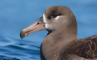 Wet and wild seabird facts for World Albatross Day!