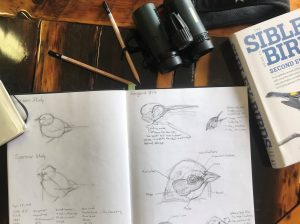 Black-capped Chickadee and Chimney Swift Sketching Tutorials