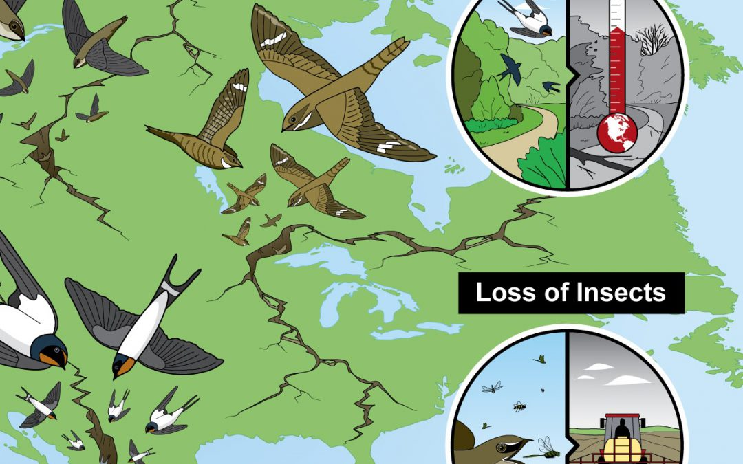 A roadmap to rescuing aerial insectivores