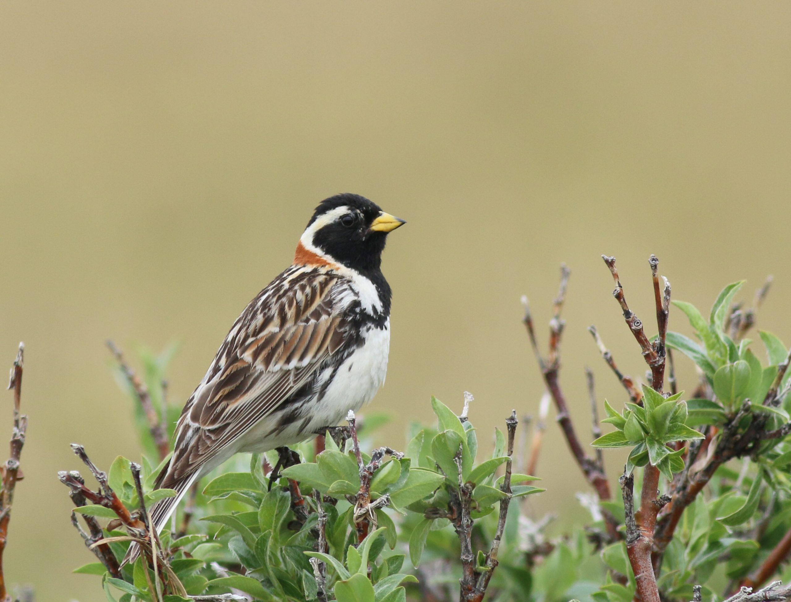 Changes to Migratory Bird Treaty Act would hurt birds: Speaking up from north of the border