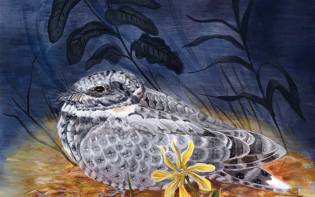 Thank you for being part of the 2020 Canadian Nightjar Survey