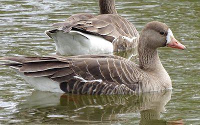 Volunteers needed to survey birds along the BC coast