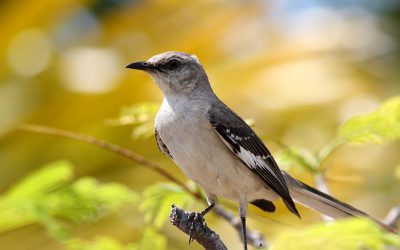 A victory for conservation partners and the Migratory Bird Treaty Act!