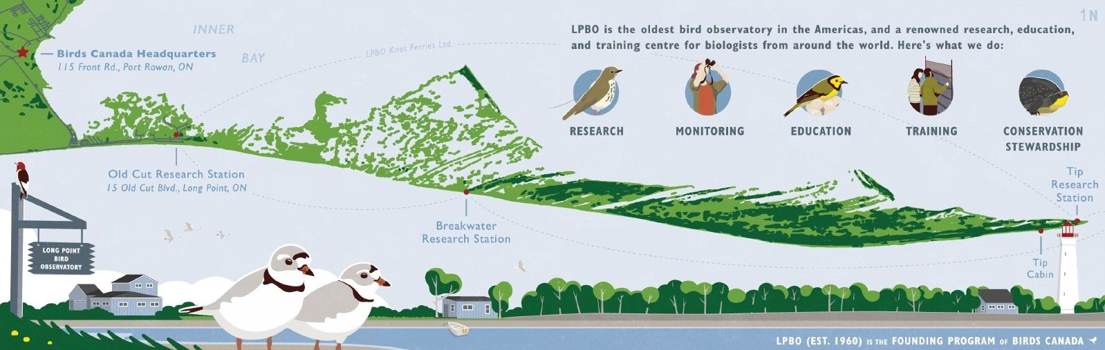 A cheerful, colourful graphic that shows a map of the Long Point Peninsula and the location of three Long Point Bird Observatory research stations: The Tip, Breakwater, and Old Cut.