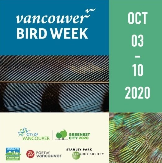Welcome Back the Winter Birds of Delta – Vancouver Bird Week