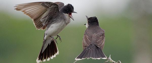 Calling all Ontario birders! Registration for Ontario Breeding Bird Atlas-3 is open.