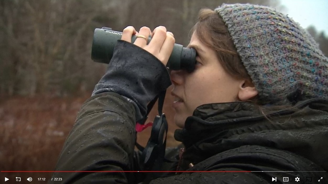 Watch a video on the Christmas Bird Count in Canada.