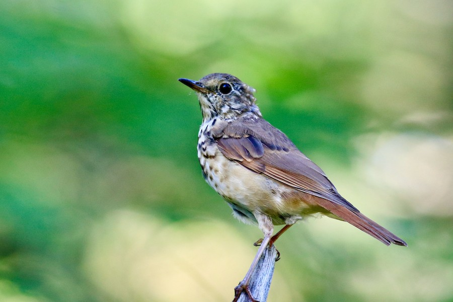 Read about eBird's database update and associated outage.