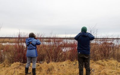 Identifying Canada's Key Biodiversity Areas to help set conservation priorities