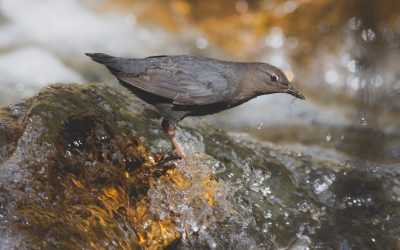 Birds Canada Winter Birds Photo Contest