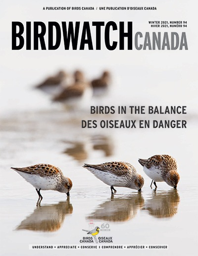 The fall 2020 cover of BirdWatch Canada. The cover features a singing Marsh Wren clinging to a reed, with its tail lifted to the sky at an improbable angle