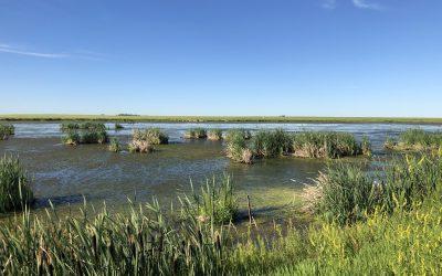 Eight ways to celebrate wetlands