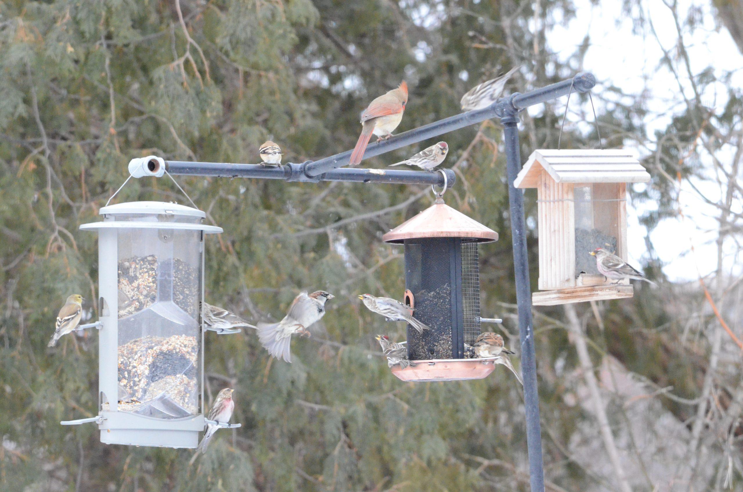 An assortment of small winter birds at a bird feeder station