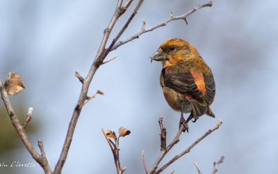 Winter Birds Photo Contest Winners