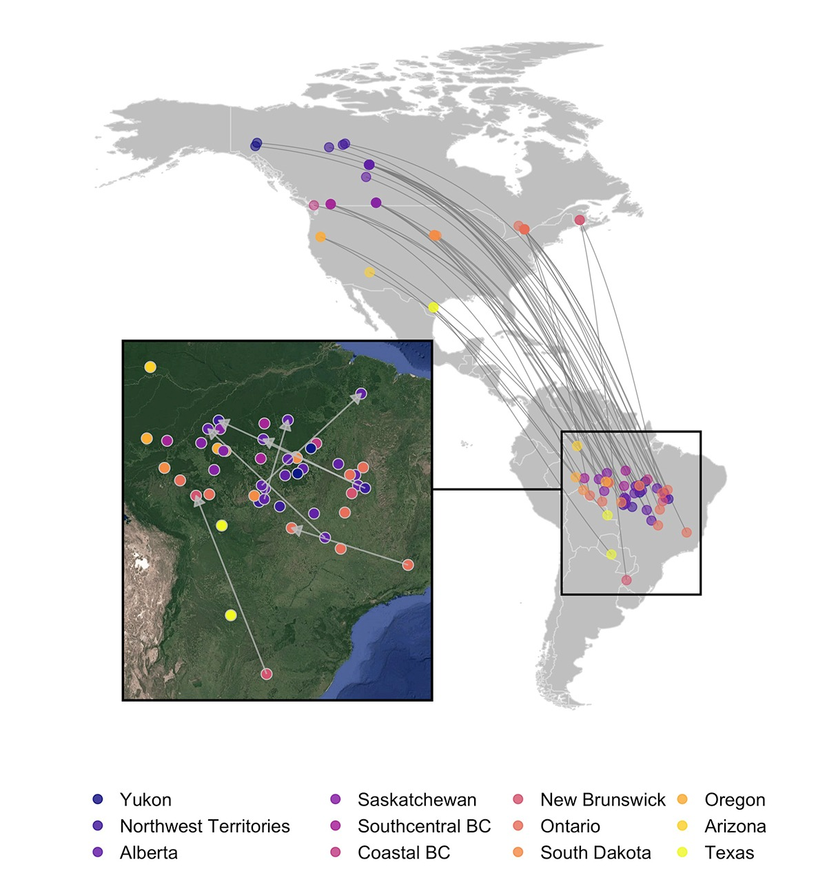 Map showing South American wintering sites for various populations breeding in Canada and the US